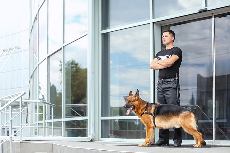Security Guard Cv in Leicester Leicestershire